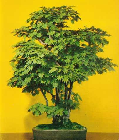 bonsai_7b