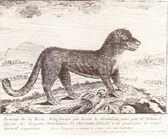hyene-allemande2
