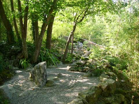 Phytotherapie bambou tao yin - Amenagement petit jardin bambou calais ...