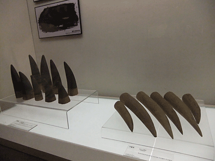 Cornes de rhinocèros