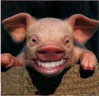 Cochon Image le cochon de feu - tao-yin