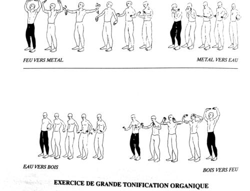 Exercice de Grande Tonification Organique