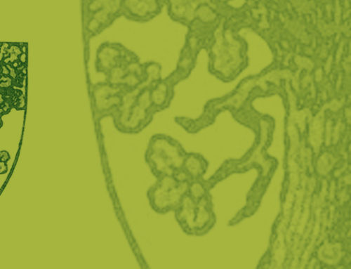 Sylvothérapie et Qigong des arbres