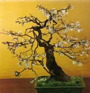 bonsai_6b