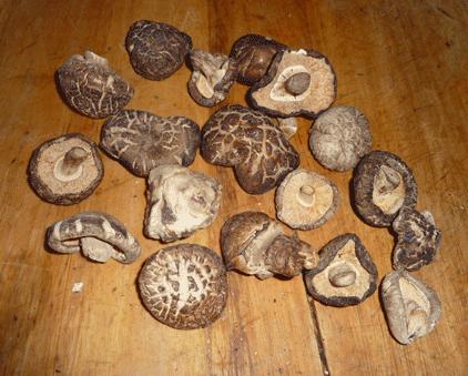 champignons parfumés