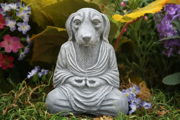 Chien en méditation Pose Lotus