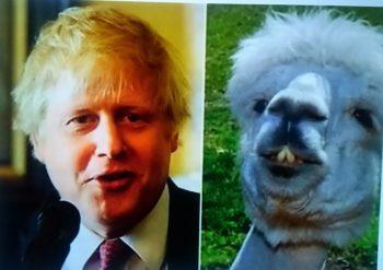 Boris Johnson et lama